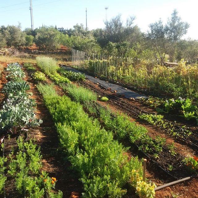 biologische tuin Portugal